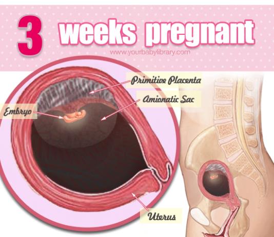 Sự phát triển của thai nhi 3 tuần tuổi, và thay đổi từ cơ thể mẹ