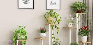 Các loại cây cảnh lọc không khí giảm ô nhiễm trong nhà tốt nhất